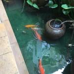 One pond